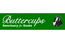 Buttercups Sanctuary for Goats